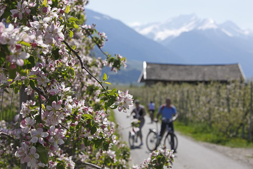 Explore the Isarco Valley on two wheels during a bike holiday in South Tyrol